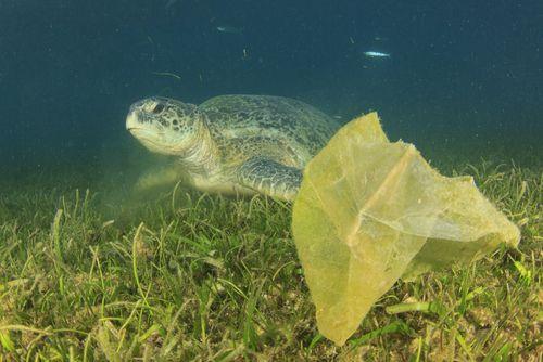 Decálogo ciudadano contra las basuras marinas
