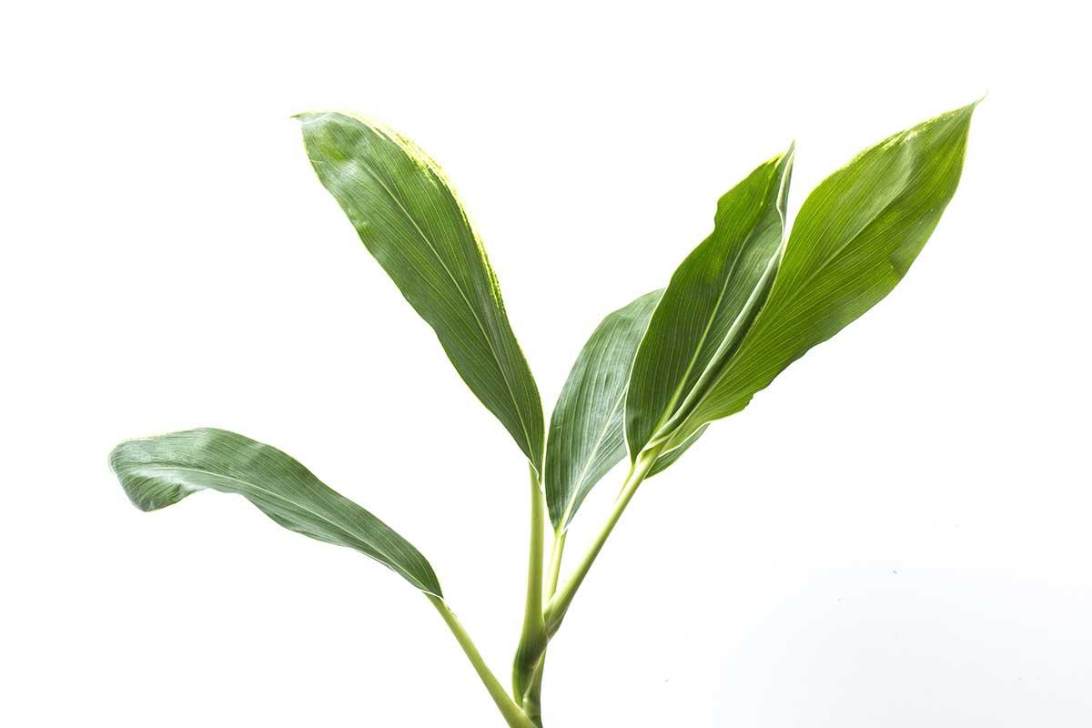 planta home