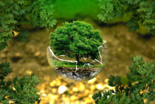 arte ecologico